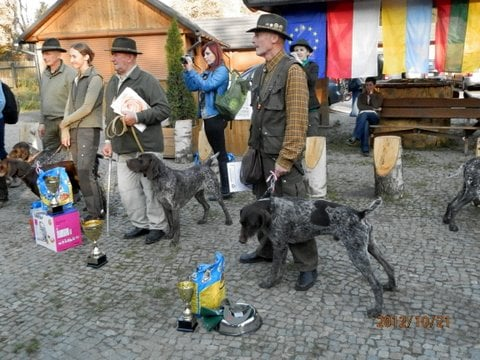 Pointer Dog Contest